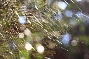 森の中の蜘蛛の糸の写真素材 [FYI00434905]