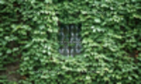 蔦と窓の写真素材 [FYI00434976]