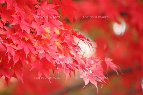 秋の色の素材 [FYI00435145]