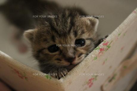 猫の顔出しの素材 [FYI00435171]