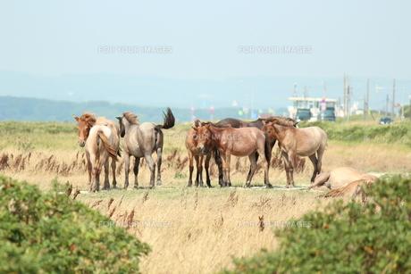 道路脇の土地で馬!の写真素材 [FYI00435217]