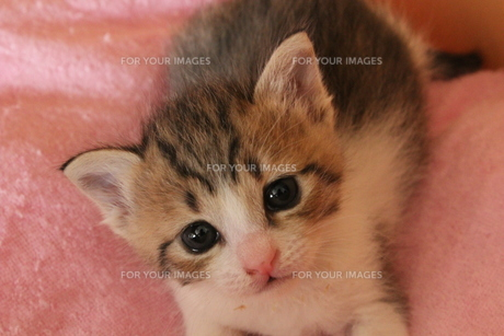 開いたばかりのつぶらな瞳の猫の写真素材 [FYI00435238]
