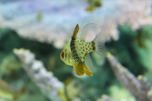 小魚さんの写真素材 [FYI00435243]