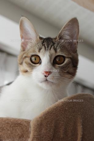 今日の猫の素材 [FYI00435244]