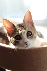 まったり猫の写真素材 [FYI00435281]