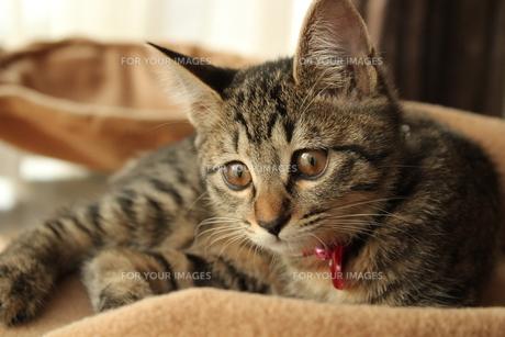 何かを発見した猫の写真素材 [FYI00435312]