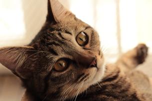 振り返る猫の素材 [FYI00435341]