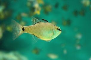 熱帯の魚の写真素材 [FYI00435368]