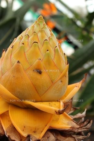 植物園で見つけた不思議な植物の素材 [FYI00435385]