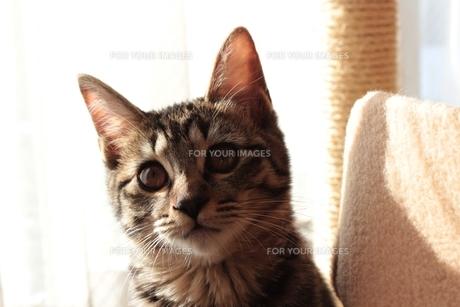 生後4ヶ月程度の我が家の猫の素材 [FYI00435392]