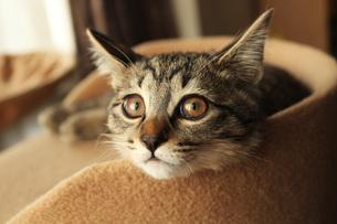 猫のアンニュイな昼下がりの写真素材 [FYI00435403]