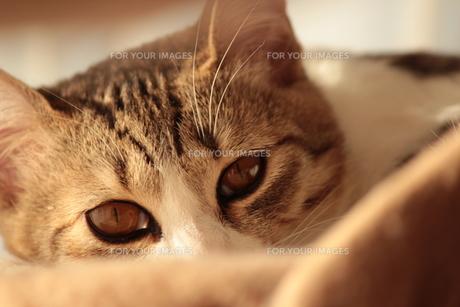 のぞき見する猫の素材 [FYI00435453]