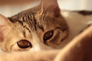 のぞき見する猫の写真素材 [FYI00435453]
