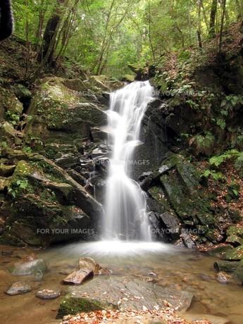 世界遺産「春日山原始林」にある鶯の滝の写真素材 [FYI00435470]