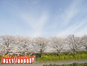 菜の花と桜に囲まれた宴会場の写真素材 [FYI00435498]