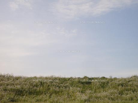 筑後川の堤防の素材 [FYI00435500]