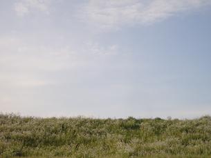 筑後川の堤防の写真素材 [FYI00435500]