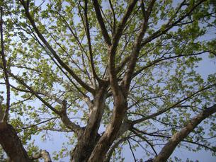 木の写真素材 [FYI00435502]