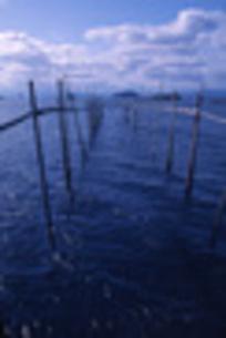 エリ漁 琵琶湖にての素材 [FYI00435632]