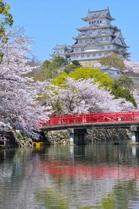 姫路城と桜の写真素材 [FYI00435944]