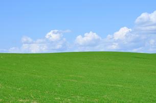 草原の丘の写真素材 [FYI00435966]