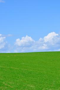 草原の丘の写真素材 [FYI00435967]