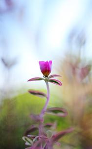 庭のピンクの花の写真素材 [FYI00436048]