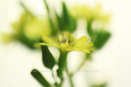 庭に咲く雑草の花の素材 [FYI00436061]