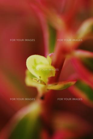 ピンクの花の茎の素材 [FYI00436075]