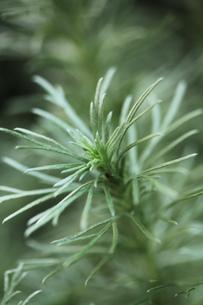 植物と戯れの素材 [FYI00436091]