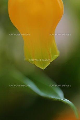 花のあたたかさの素材 [FYI00436134]
