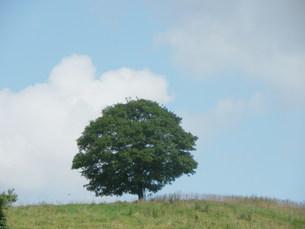 一本木の写真素材 [FYI00436255]