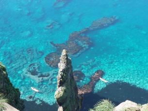 透き通る天売島の海の写真素材 [FYI00436277]