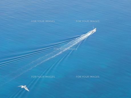漁船とカモメの写真素材 [FYI00436320]