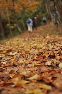落ち葉の登山道の写真素材 [FYI00436340]