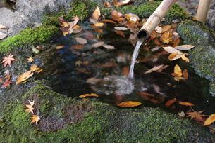 庭園の水の素材 [FYI00436452]