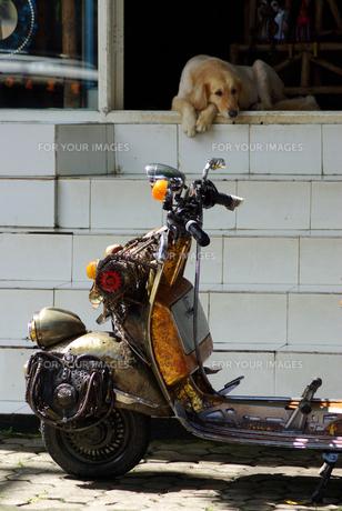 バイクと野良犬の写真素材 [FYI00436647]