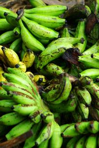 市場のバナナの素材 [FYI00436653]