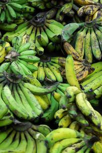 バナナの写真素材 [FYI00436673]