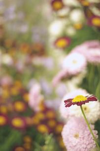色々な花の写真素材 [FYI00436787]