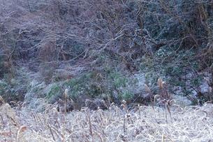 冬の耕作放棄地の写真素材 [FYI00436971]