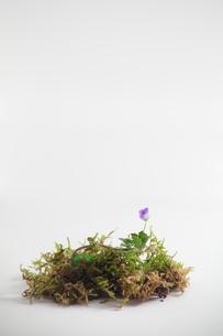 春の部分の写真素材 [FYI00436978]