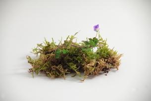 春の部分の写真素材 [FYI00437000]