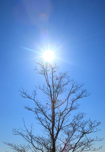 春の太陽の写真素材 [FYI00437011]
