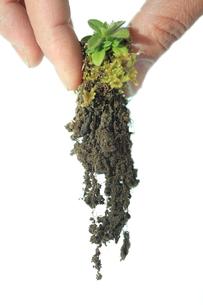 土と植物の写真素材 [FYI00437022]