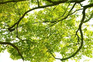 春の緑の写真素材 [FYI00437063]