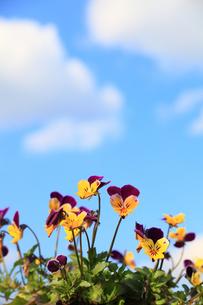 晴れた春の日の写真素材 [FYI00437066]