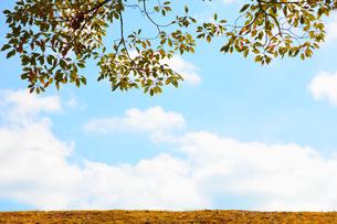 青い空と緑の写真素材 [FYI00437067]