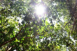 緑の中の光の写真素材 [FYI00437081]
