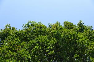 緑と空の写真素材 [FYI00437084]
